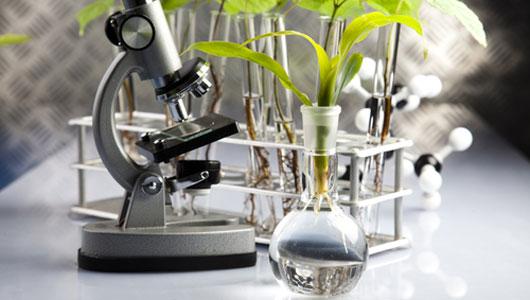 main_medicinal_plant
